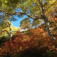 autumn in kamiköchi