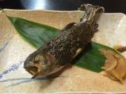 the fish......