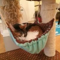 i love my hammock